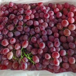 Jual Anggur Di Tangerang,Jual Buah Grosir Di Tangerang