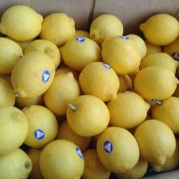 Jual Lemon Di Tangerang,Jual Buah Grosir Di Tangerang