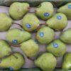 Jual Pear Di Tangerang,Jual Buah Grosir Di Tangerang