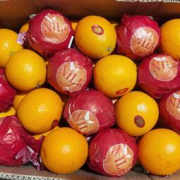 Orange,Jual Jeruk Di Tangerang,Jual Buah Grosir Di Tangerang