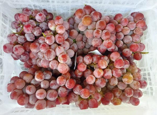 Jual Anggur Di Tanah Tinggi,Jual Anggur Di Lampung,Jual Anggur Di Serang Banten
